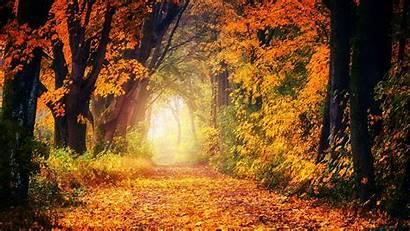 Autumn Park Golden Foliage Trees Widescreen Path