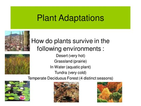 Plant Adaptations By Rainbowhunter  Teaching Resources Tes