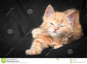 Cute Fluffy Ginger Kittens