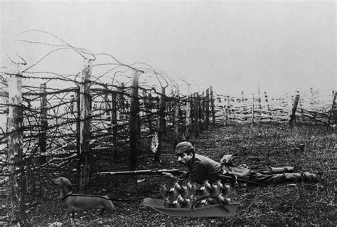 Barbed Wire Ww1 Trench Warfare Wwwpixsharkcom Images