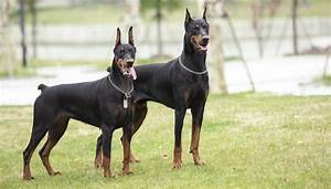 20 Strongest Dog Breeds In the World