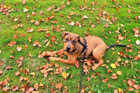 hundegeschirr typen fuer den sport rad und hund