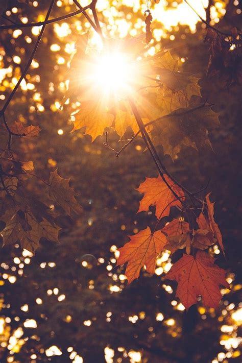 autumn photography ideas  pinterest autumn