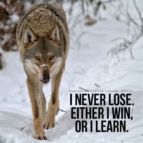 wolf quotes ideas  pinterest wolf qoutes