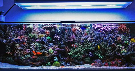 led t5 aquarium how a reef tank really looks hybrid t5 led lighting gear led lights news product