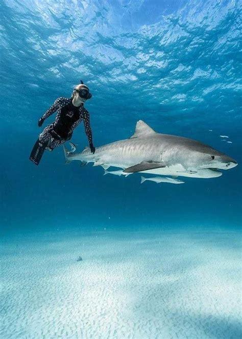 xcel ocean ramsey mm whale shark spring suit adreno