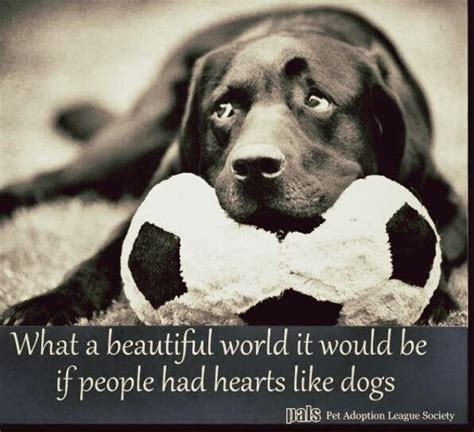 quotes related  dogs images  pinterest
