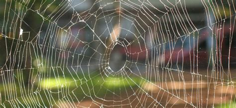 la plus grosse araign 233 e du monde et la plus venimeuse vues