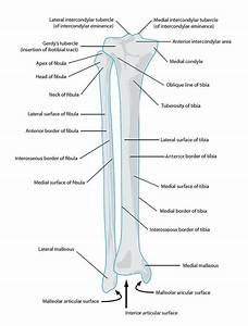 29 Best Images About Anatomy On Pinterest