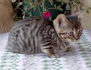 Cute and Pet Animals: brown tabby cats