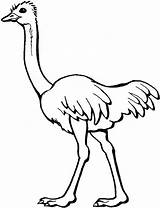 Ostrich Coloring Pages Animal sketch template