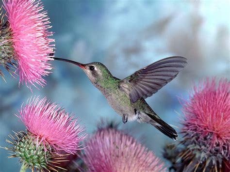 flowers  birds background