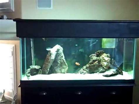 part 1 diy saltwater aquarium plumbing setup basement