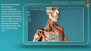 3d Online Anatomy
