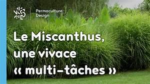 Graminées Vivaces Hautes : le miscanthus une vivace multi t ches et tr s ~ Premium-room.com Idées de Décoration