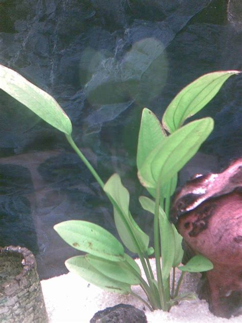 sos mes plantes deperissent forum aquarium