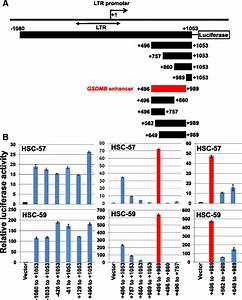 A GSDMB enhancer-driven HSV thymidine kinase-expressing ...