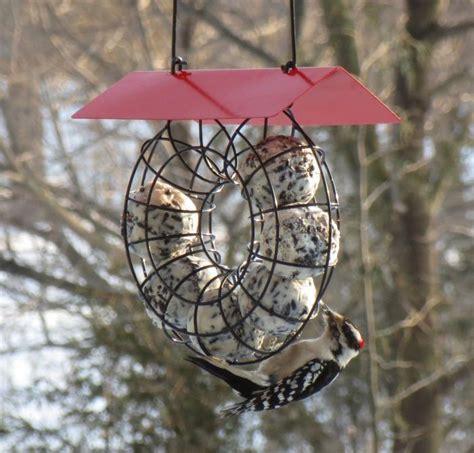 songbird essentials suet ball red roof  wire circle bird feeder