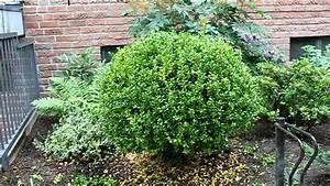 Buchsbaum Schneiden Formen : buchsbaum aus freier hand in form schneiden newwonder555 ~ A.2002-acura-tl-radio.info Haus und Dekorationen
