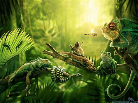 Jungle Animal Wallpaper - jungle hd images wallpapers 5262 amazing wallpaperz