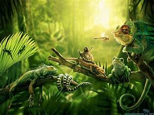 Jungle High Quality Wallpapers 5253 - Amazing Wallpaperz