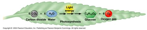 lesson plans  respiration  photosynthesis middle