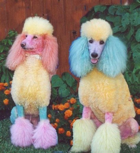 116 Best Ideas About Dogs With Color On Pinterest
