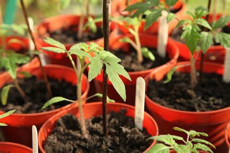 Kādi dārza darbi jāveic februārī? - 1188 padomi