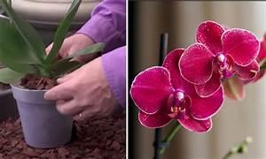 Rempoter Une Orchidee : cet expert du jardinage vous montre comment bien rempoter ~ Mglfilm.com Idées de Décoration