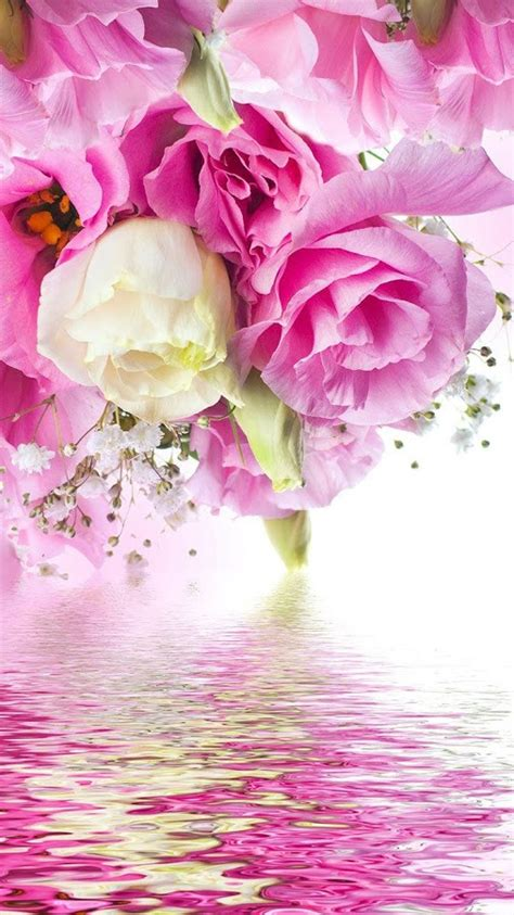 pink roses  wallpaper android apps  google play