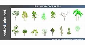 Vegetation Cad Blocks  Color Trees In Plan Elevation