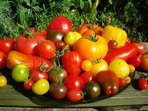Beste Zeit Zum Tomaten Pflanzen : tomatensortiment 2013 zauberstaude ~ Lizthompson.info Haus und Dekorationen