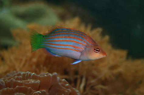 wrasses  aquarium setup filtration