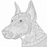 Doberman Dog Zentangle Pinscher Stylized Coloring Animal Adult Illustration Doodle Vector Sketch Head Cartoon Abstract sketch template