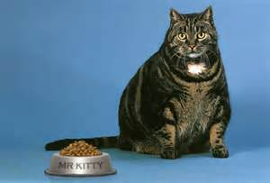 Cats Eating Food Too Much