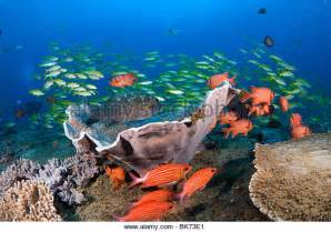 Colorful Coral Reef Scenes