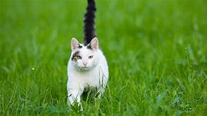 Katzen Fernhalten Von Möbeln : video was uns katzen sagen wollen tiere suchen ein zuhause sendungen a z video ~ Sanjose-hotels-ca.com Haus und Dekorationen