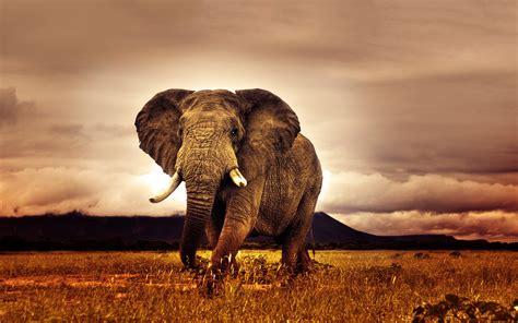 african safari pictures - HD Desktop Wallpapers   4k HD