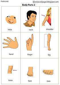 Body Parts Flash Cards