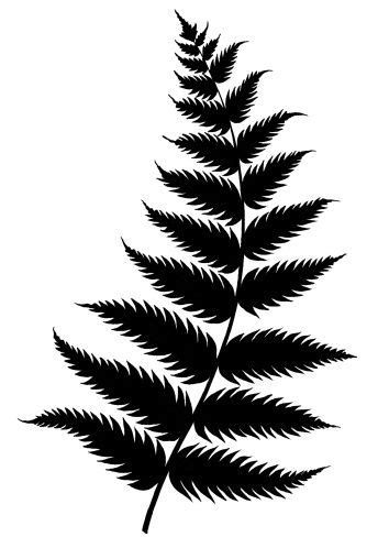 152376375-silhouette-of-new-zealand-fern-gettyimages.jpg
