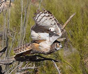 53 best images about zoogle owls on Pinterest | Feathers ...