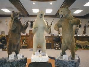 Kodiak Grizzly vs Polar Bear