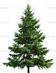 Christmas Tree Type Plants by The Wild Beauty