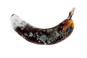 verdorbene alte banane stockfoto colourbox