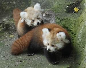 50 Cute Baby An... Cute Animals