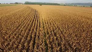 Aerial View Of Corn Field Stock Footage Video 7581019 ...
