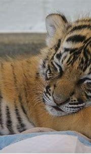 Cincinnati Zoo 3-4-17-2038 | Animals beautiful, Cincinnati ...