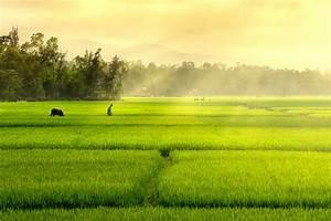 Rice field 01 by garki on DeviantArt