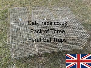 cat traps feral cat trap standard feral cat trap cat traps co uk