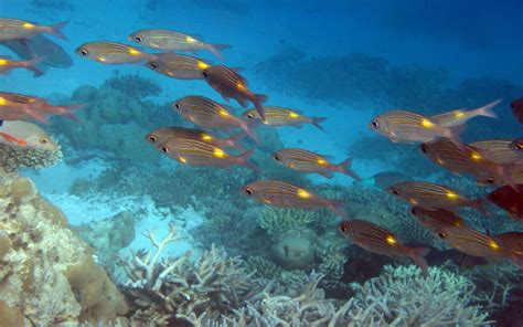 Ocean Fish Coral Underwater World Background For Desktop